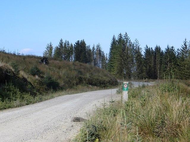 Logging road, Eredine Forest