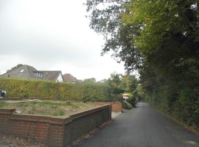 Front gardens on Hilltop Lane, Chaldon