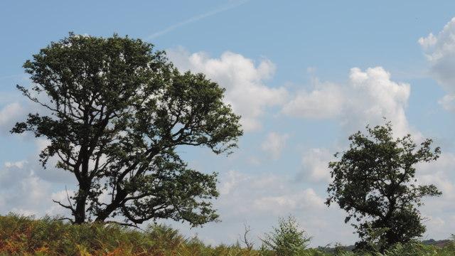 Trees on the Skyline