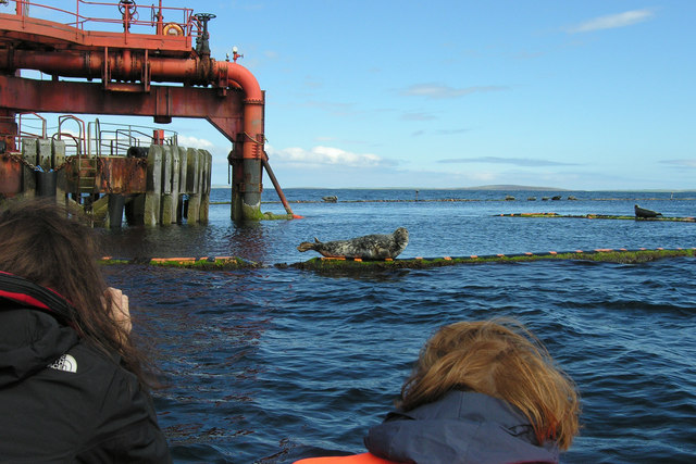 SPM No. 1 and Grey Atlantic seal, Scapa Flow, Orkney