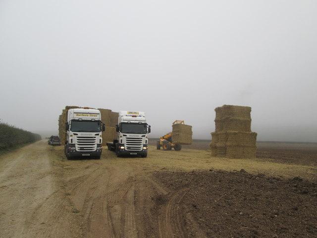 Lorries  loading  straw  at  Northfield  Farm  (1)
