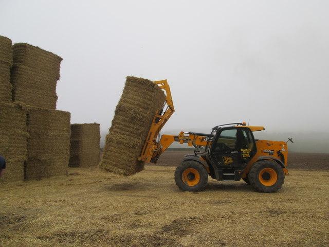 Lorries  loading  straw  at  Northfield  Farm  (2)