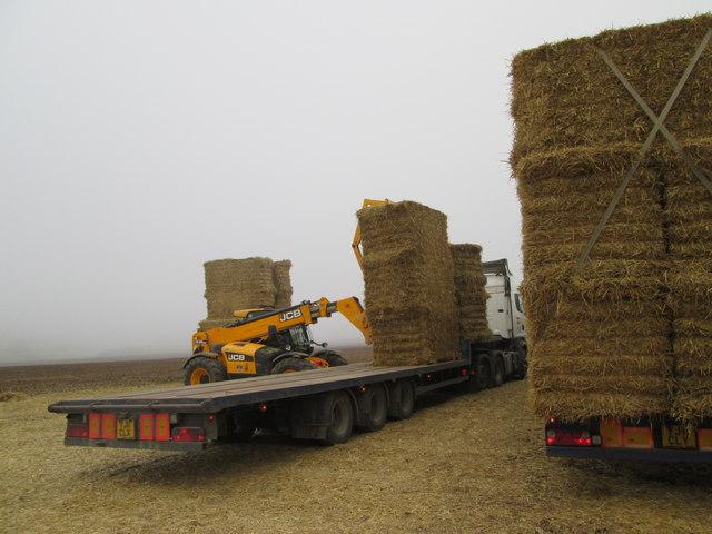 Lorries  loading  straw  at  Northfield  Farm  (3)