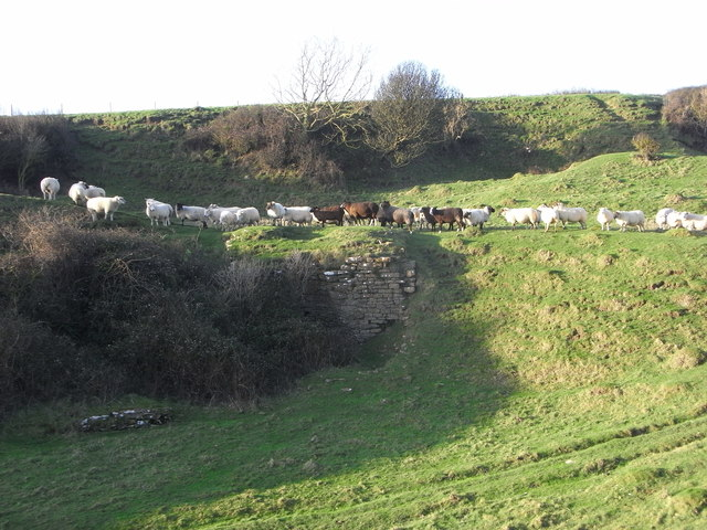 Disused lime kiln and sheep, West Cliff, West Bay