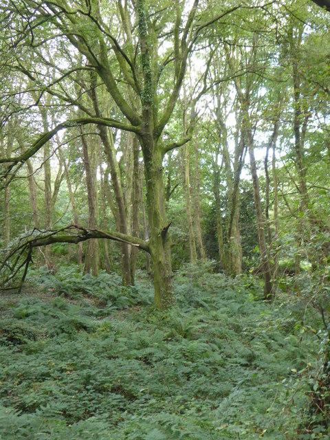 Carwynnen Woods