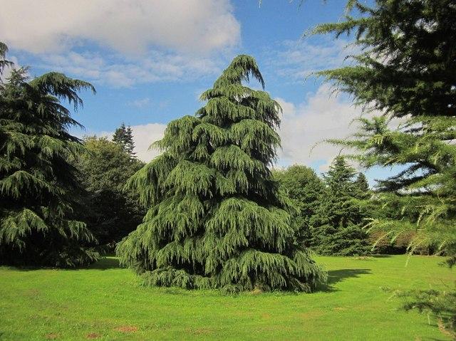 Tree, Oldbury Court
