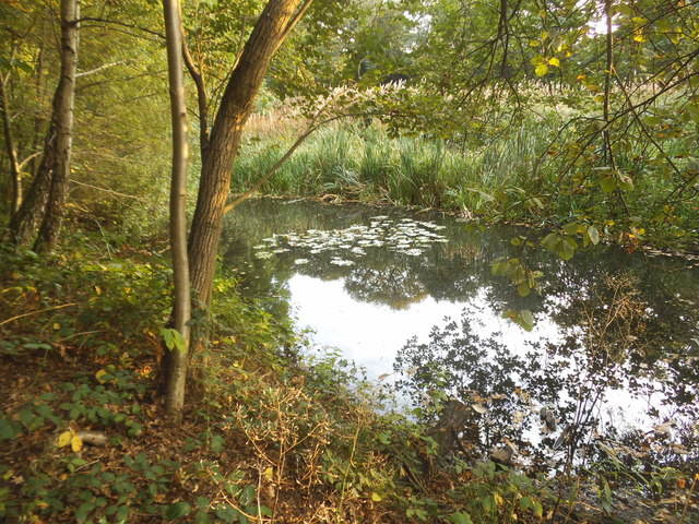 Pond on Hampstead Heath Extension