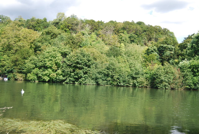 Wooded slope above the River Thames