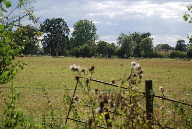 Farmland by the River Thames