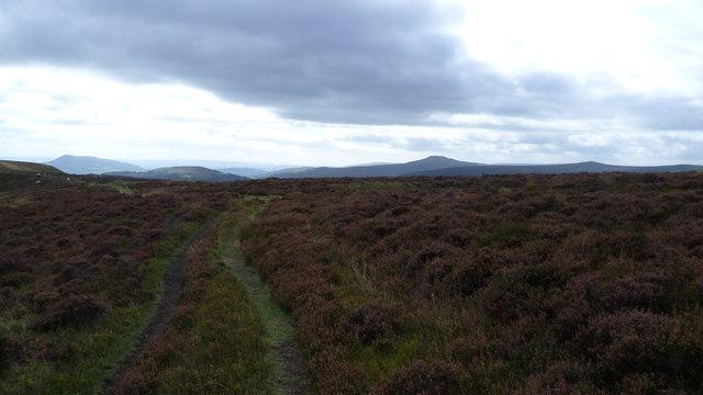 Approaching a path cross road below Bal Mawr