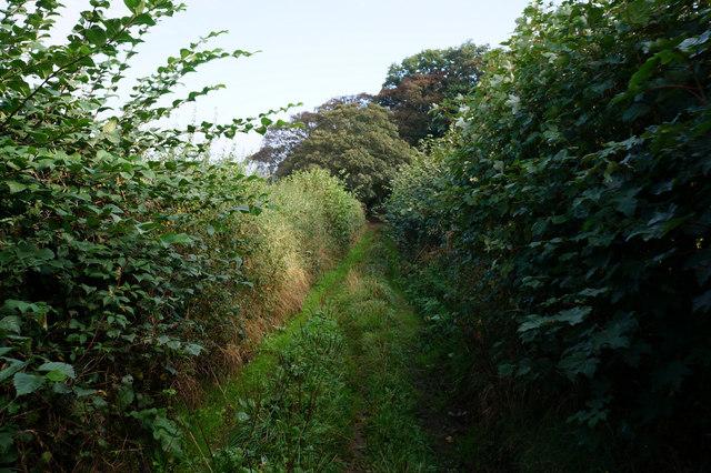 Elwick Lane towards Thorpe Green Lane