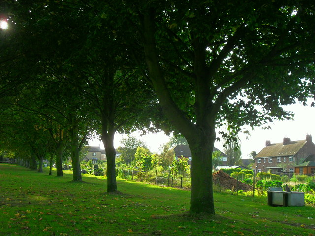 Recreation ground allotments and bordering trees, Haddenham
