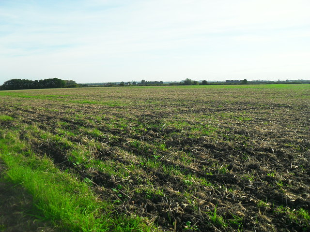 Arable land, Haddenham
