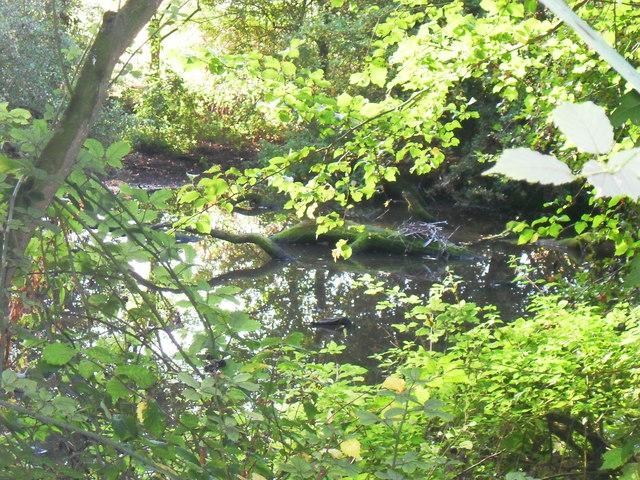 Pond in a wood, Haddenham