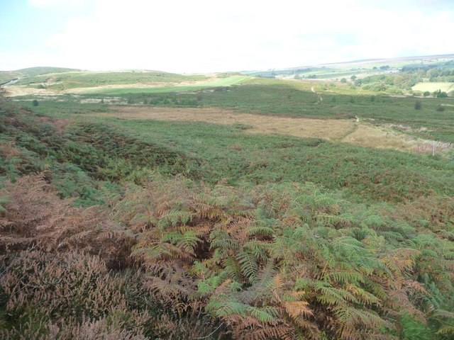 Path crossing Bracken Hill, Baildon Moor