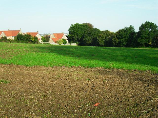 Arable land, Haddenham