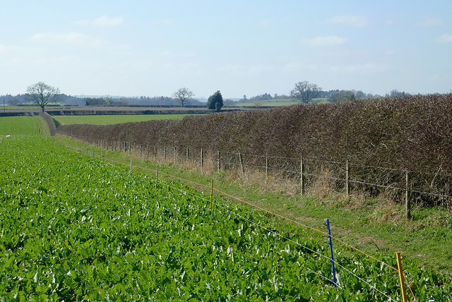 Crop field and footpath from Cranmere near Worfield, Shropshire