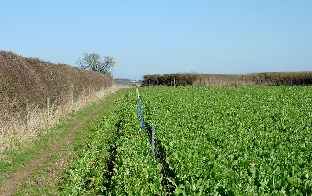 Crop field and footpath to Cranmere near Worfield, Shropshire