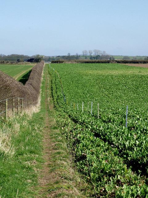 Public footpath north of Worfield, Shropshire