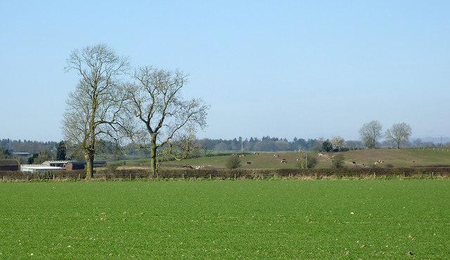 Fields north of Worfield, Shropshire