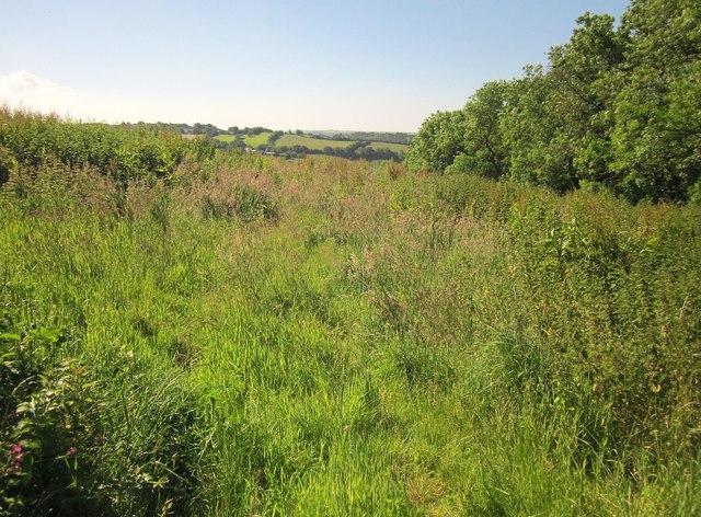 Field near Poldrissick