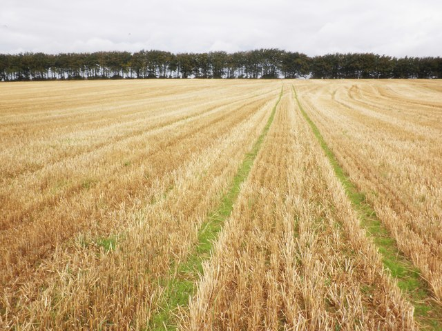 Field of stubble, above Elworthy