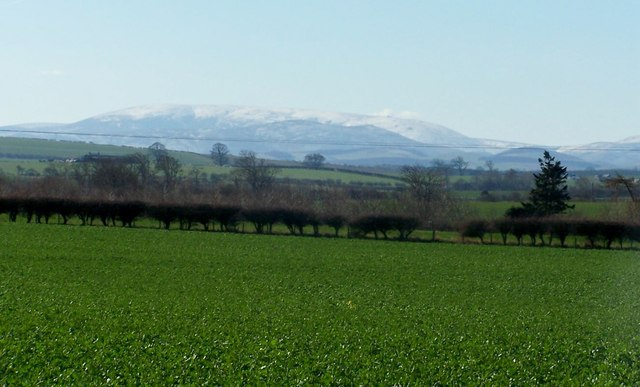 Cheviots from near Horncliffe