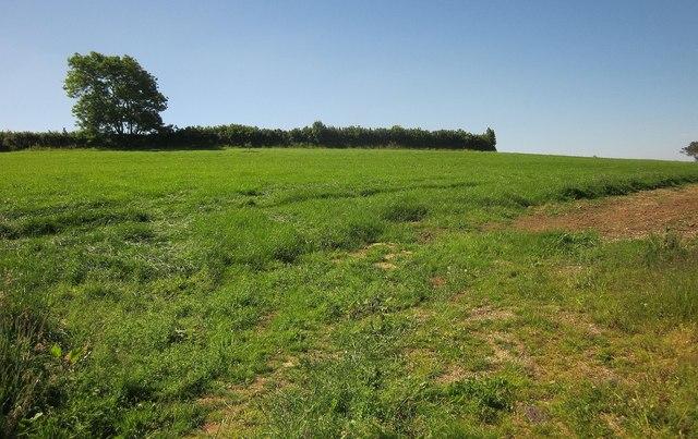 Field near St Erney