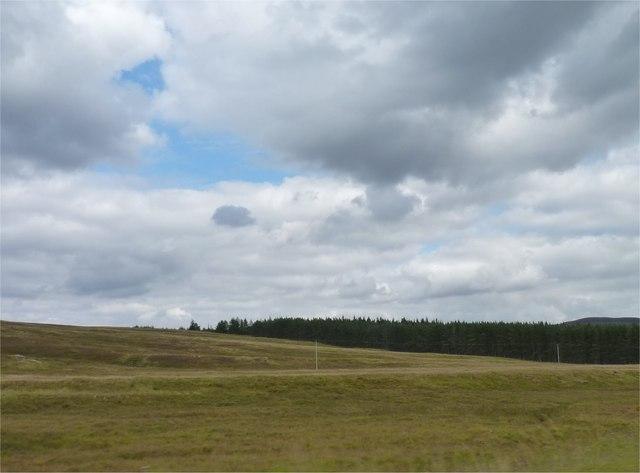 Dalnamein Forest