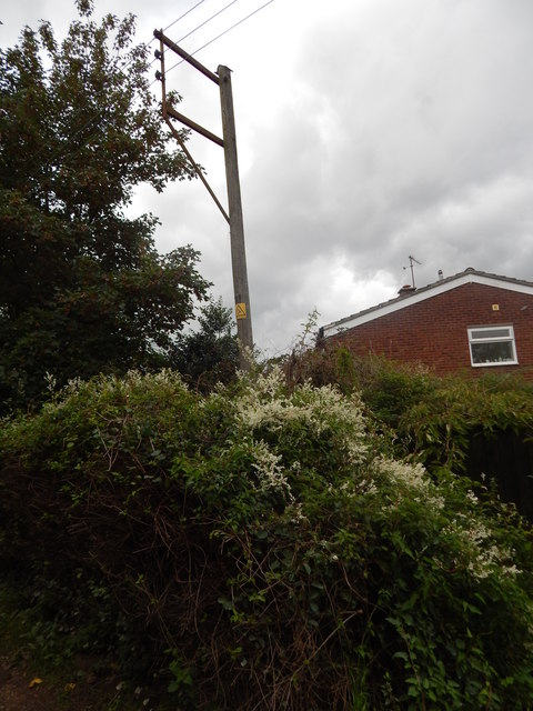 Telegraph pole and climber