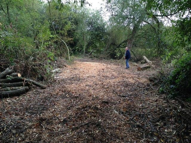 Area of felled trees