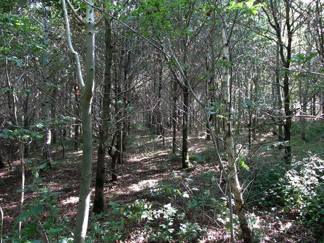 Mixed woodland plantation, Ratby Burroughs