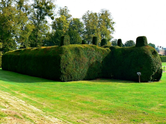 Yew hedge, Holme Lacy House, Herefordshire