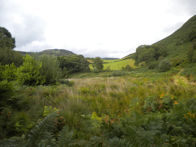 Looking east from Dolgoch