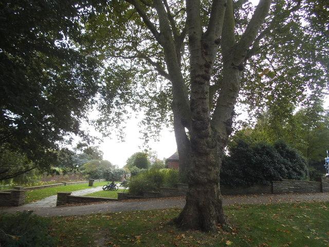 Tree in Gladstone Park