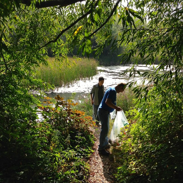 Volunteers litter-picking in Forbes Hole