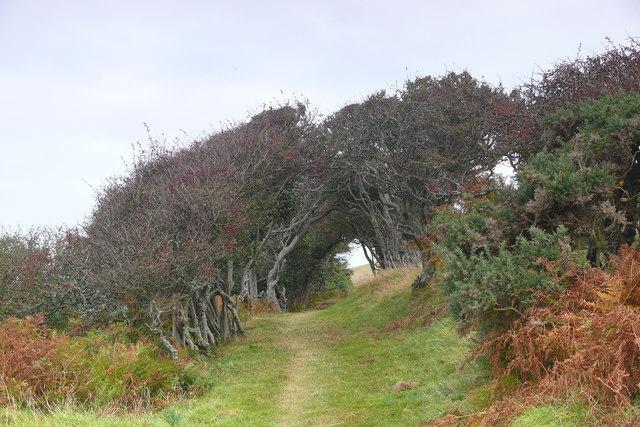 Llwybr Arfordir Ceredigion / Ceredigion Coast Path