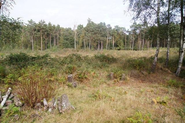 Humid heath