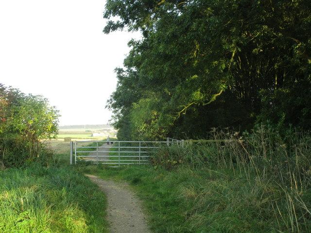 Bridleway by Littlefield Plantation