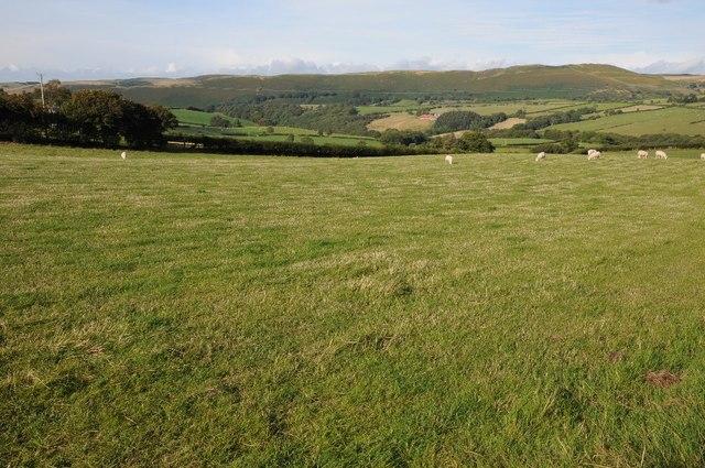 Grazing land near Tan-y-Fron