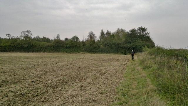 Path towards Watt's Wood Nature Reserve
