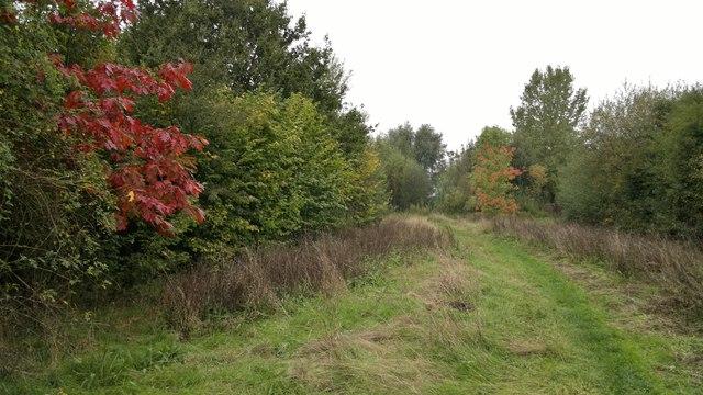 Inside Watt's Wood Nature Reserve