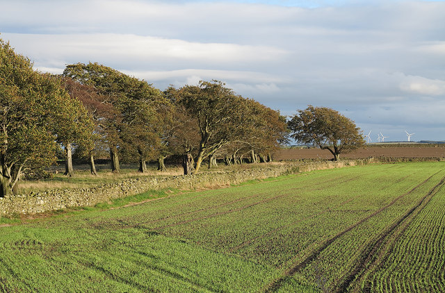 Field east of A68