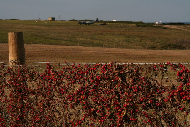 Bryony fence on Weybourne Airfield