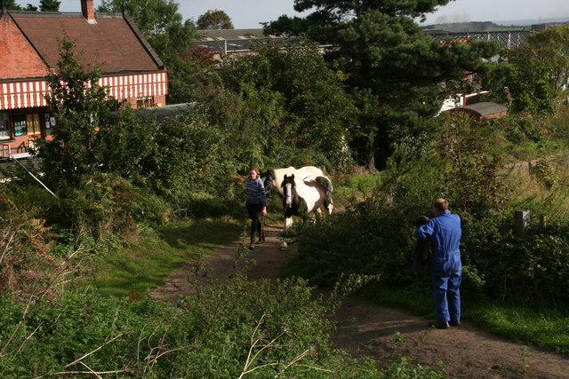Bringing in the horses, track by Weybourne Station