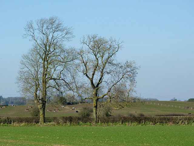 Farmland  with oak trees near Hartlebury, Shropshire