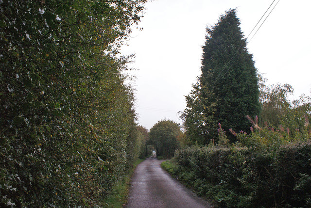 High hedges in Ford Hayes Lane