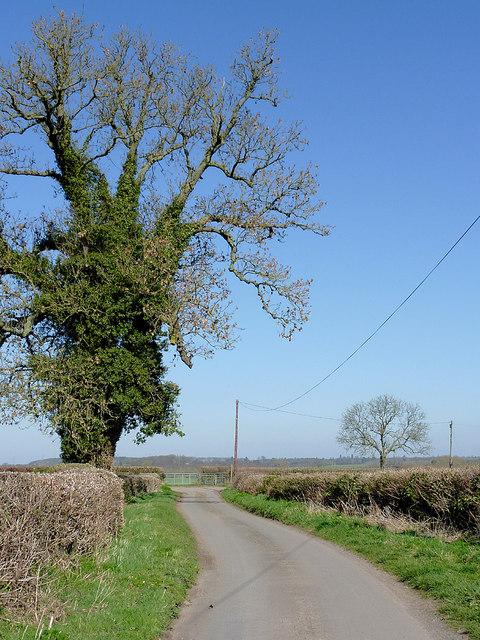 Lane at Catstree near Worfield, Shropshire