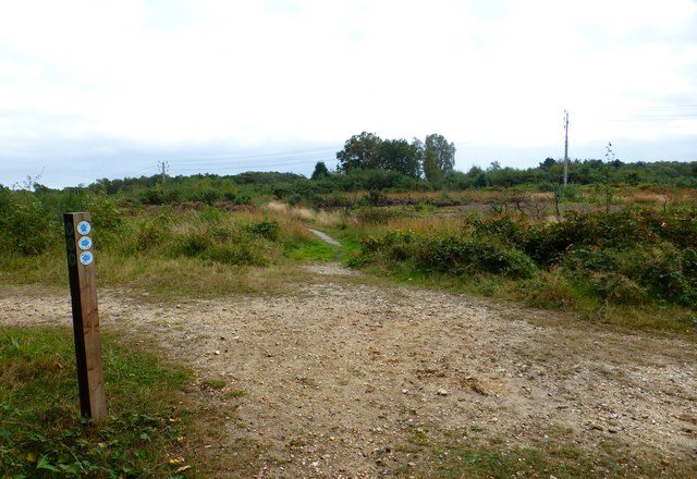 Bridleways cross on Yately Common