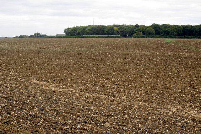 Twin Wood and ploughed field